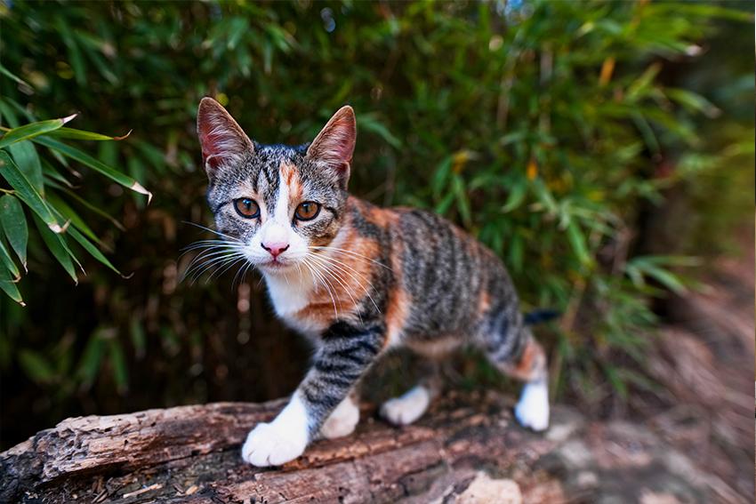 CBD Tiere Katze